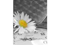 Fotoalbum DPH-4636 Time 1