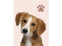 Fotoalbum MM-46100B Plush 1 hnědý pes