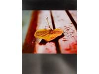 Fotoalbum B-46200 Break 3 list