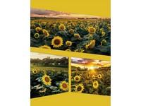 Fotoalbum DRS-30 Opposite 1 květ