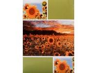 Fotoalbum MM-46200M Sunrise 2 zelené