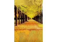 Fotoalbum B-35200S Fauna 2 tygr