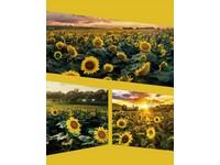 Fotoalbum MM-35200 Native 1 žluté